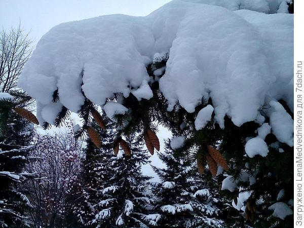 Ёлки, шишки и снег