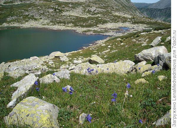 Синие озера, голубые цветы - как не зависнуть в такой красоте