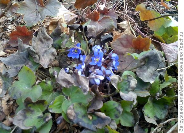 И цветочки, и листочки
