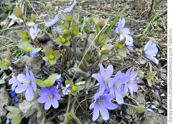 Здесь и цветочки, и уже завязываются семена