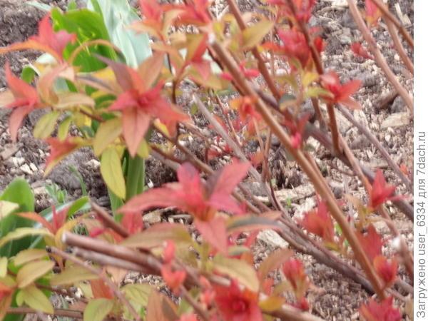 Красив как в весенней листве