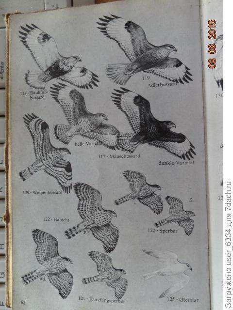 """как и для определения птиц по """"Wir bestimmen die Vögel Europas"""" ( Мы изучаем птиц Европы) Вольфганга Макача"""