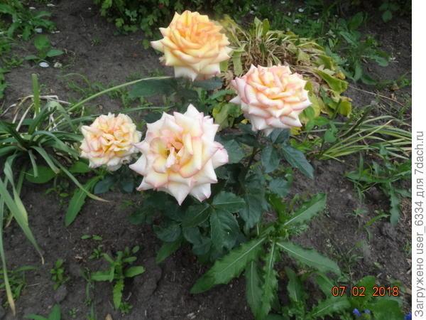 Аж 4 цветка