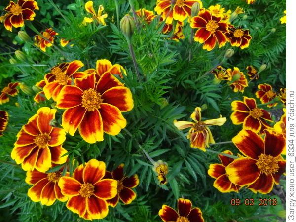 Явив завидное разнообразие узоров на цветочных корзинках.