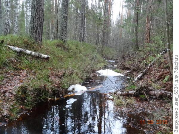 Прозрачно-черная вода и белая пена - танины, гумины и протеины..