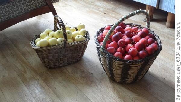 Яблоки в основном уже созрели, собраны и съедены(переработаны). Немало и роздано. И это с трех молоденьких деревьев (плюс одно побольше)