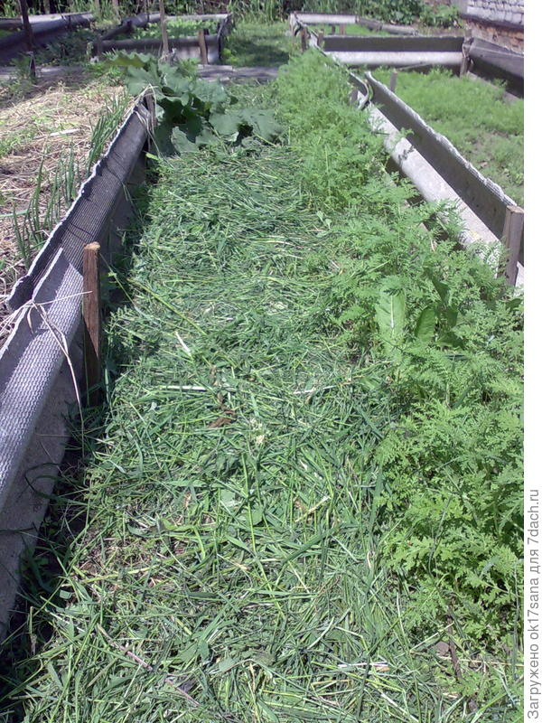Скошенная трава на дорожке между грядками.