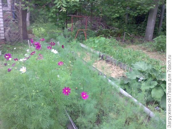 Грядки со смешанными посадкой, замульчированные сеном.