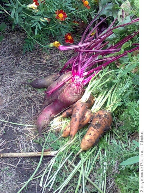 Первые овощи 2016 года.