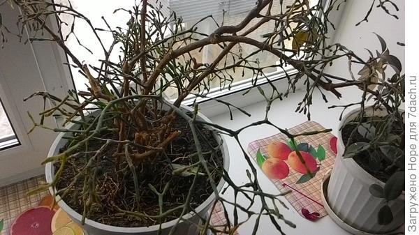 Как называется растение и как за ним ухаживать (если выживет)