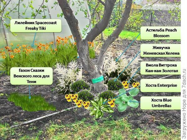 Растения под яблоней