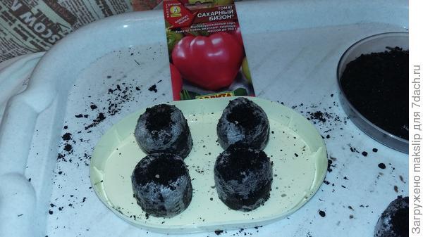 Посев томата Сахарный бизон