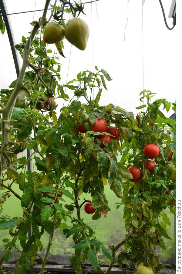 1 октября. Урожай еще есть