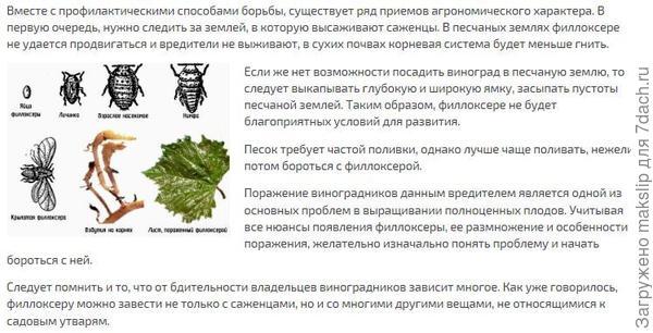 https://rusfermer.net/sad/vinogradnik/uhod-za-vinogradom/kovarnaya-filloksera-priznaki-i-metody-borby.html