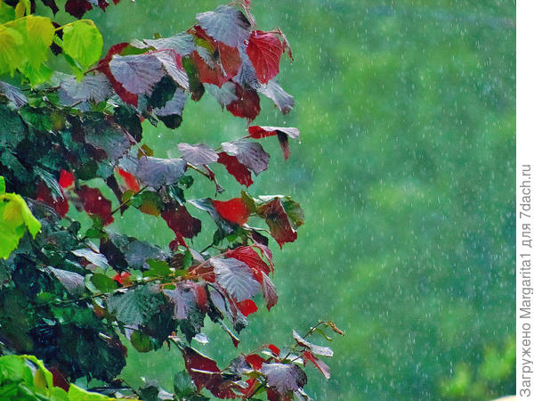 Дождь стеной-это про нашу погоду