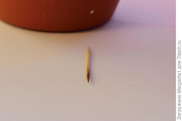 Зубочистка из контрольного кашпо( со мхом)