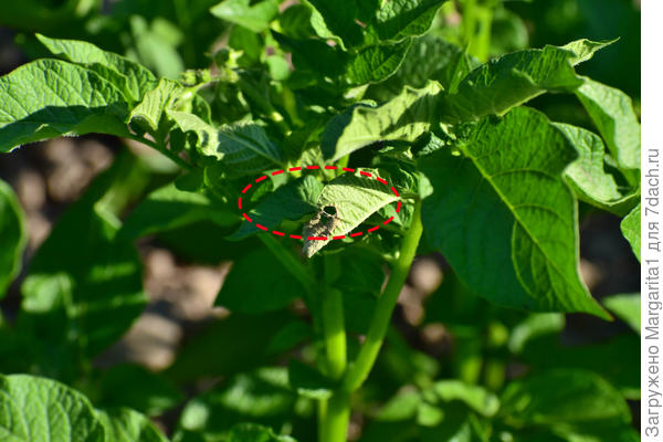 Следы деятельности жуков