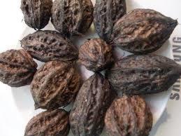 Плоды маньчжурского ореха