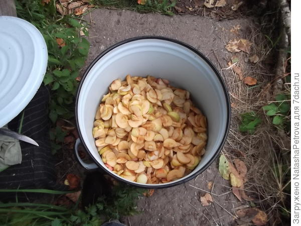 Нарезанные яблоки в эмалированном баке