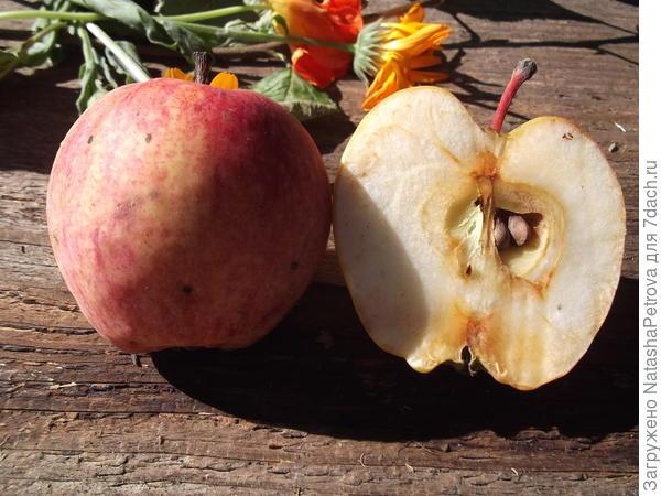 Яблоко №1 в разрезе