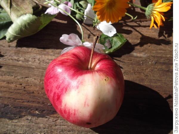 Верхняя часть яблока № 4