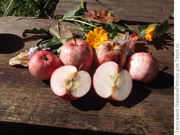 Яблоки с дерева № 5