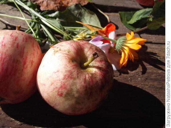 Коричневые пятна на яблоке № 5