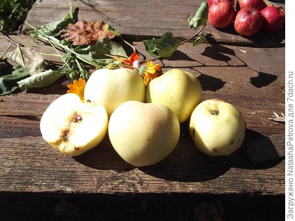 Яблоки № 6