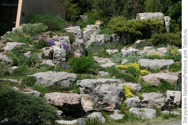 """Альпийская горка """"горный склон"""". Фото с сайта http://www.plantselectpetites.org/"""