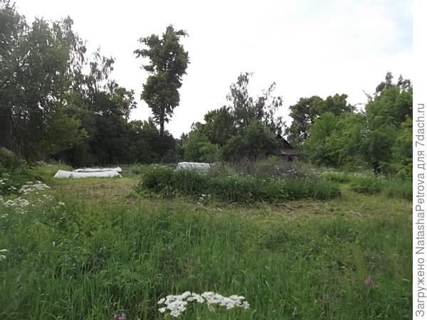 Вид на дом (в правом верхнем углу) примерно с трети участка