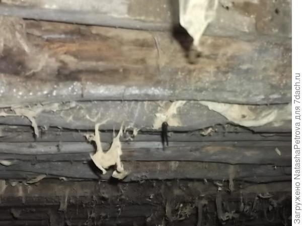 Перекрытия под печкой, что на фото выше. Вид в подвале