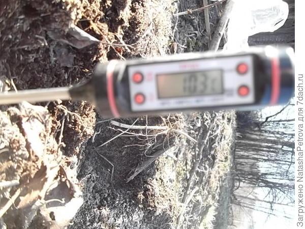 Температура почвы: + 10,3