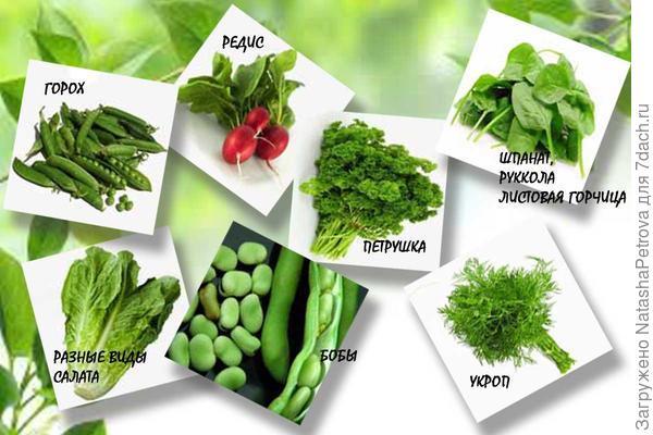 Горох, бобы, укроп, петрушка, салат, шпинат и редиска