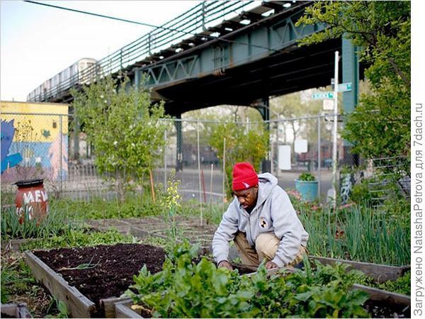 Огород на улице Детройта. Фото с сайта rochestertalon.com