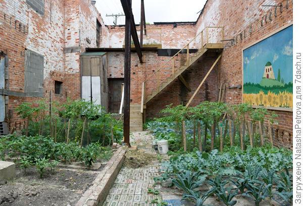 Ещё один стихийный детройтский огород. Фото с сайта heartland.vanabbe.nl
