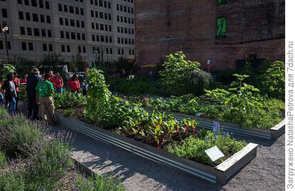 Общественный огород в Детройте. Фото с сайта varlamov.ru