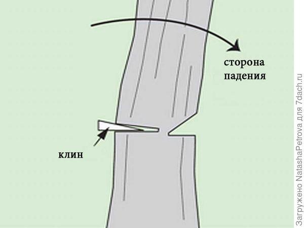 Вставить клин в валочный пропил. Фото с сайта http://leroymerlin.ru/