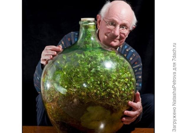 Сад в бутылке Дэвида Латимера