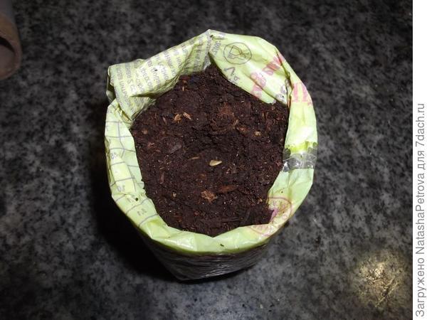 Грунт в рассадном стаканчике