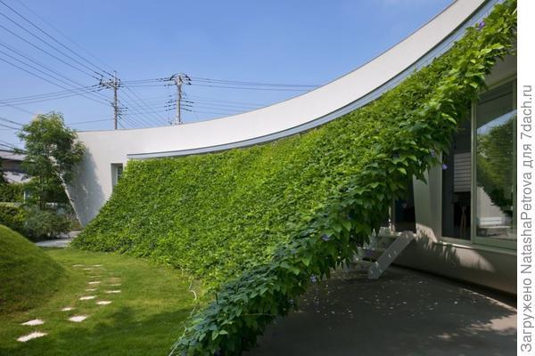 Дом с зелеными экранами. Фото с сайта kumakihideo.blogspot.com