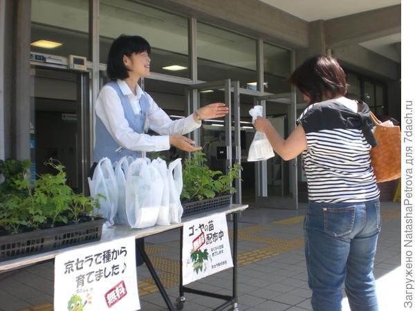 Жителям раздают семена и рассаду растений для зелёных экранов. Фото с с сайта http://global.kyocera.com
