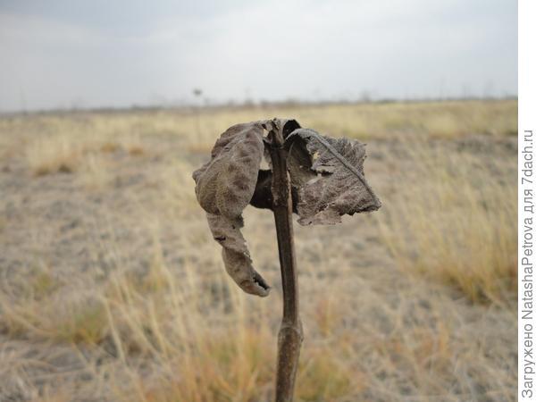 Глобальное изменение климата на планете грозит сельскому хозяйству