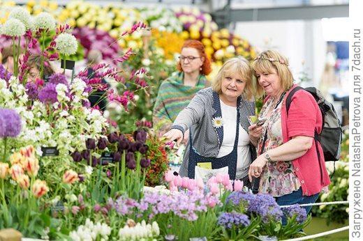 Цветочное шоу в Челси 2017 - Мекка для всех любителей цветов. Фото с сайта rhs.org.uk
