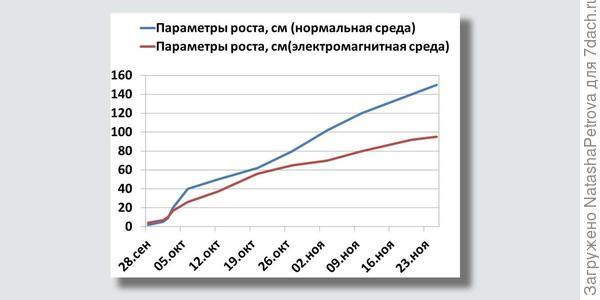 График развития растений. Фото из исследовательской работы Григория Здобнова, ученика 5-го класса СОШ №15 г. Находка