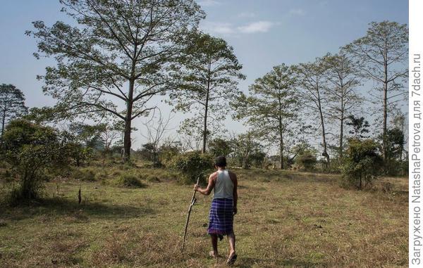 Человек, посадивший лес. Фото Carlo Bevilacjaua с сайта carlobevilacqua.photoshelter.com