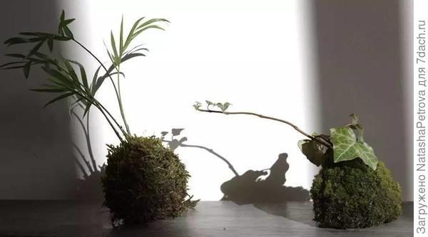 Кокэдама. Фото с сайта doc.sanwenba.com