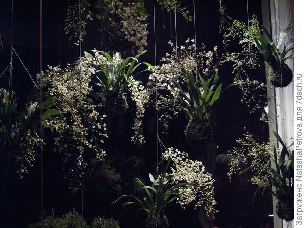 Кокэдама на европейский лад. Фото с сайта stringgardens.com