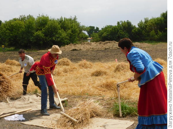 Состязание по уборке ячменя. Фото с сайта http://beltourism31.ru