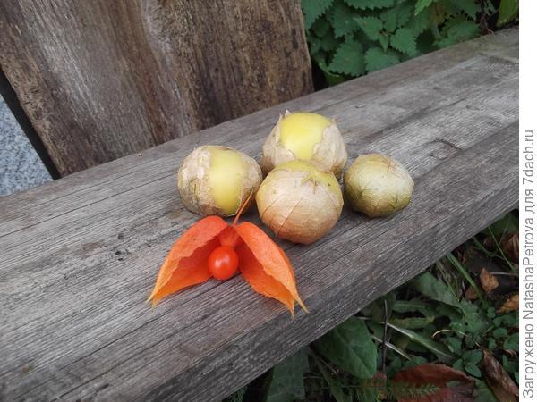 Физалис. Овощной и декоративный