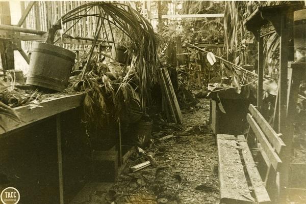 Погибшие от холода тропические растения. Фото из архива Ботанического сада http://botsad-spb.com